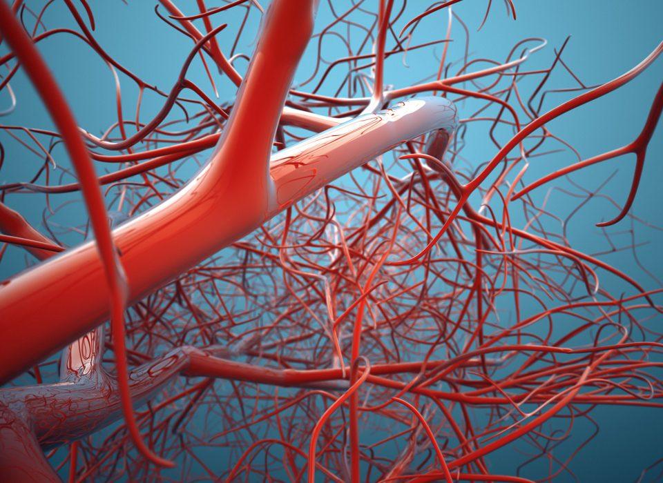 Vascular System, Veins